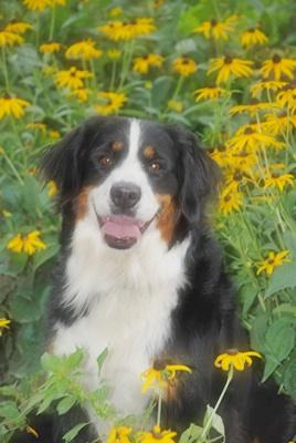 Bailey, such a pretty girl!